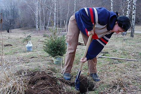 Volunteers plant Christmas trees in pots in Vitosha Nature Park, Bulgaria, 11 April 2009 rel=