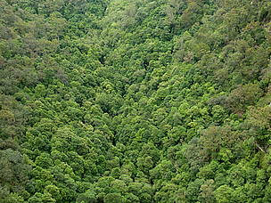 Panoramic view of a forest  © WWF